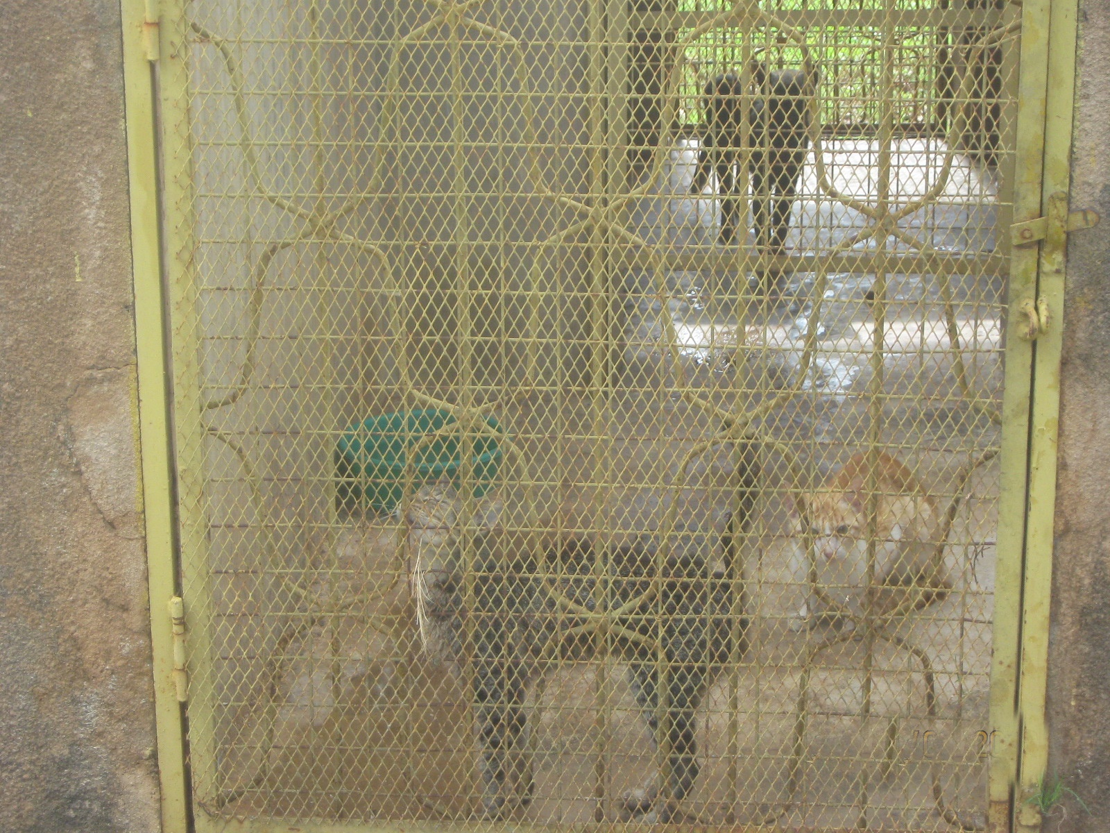 cats were kept in cannels with adequate food and water