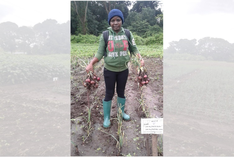 Msc student harvesting onion in a plot applied both biowaste & urea