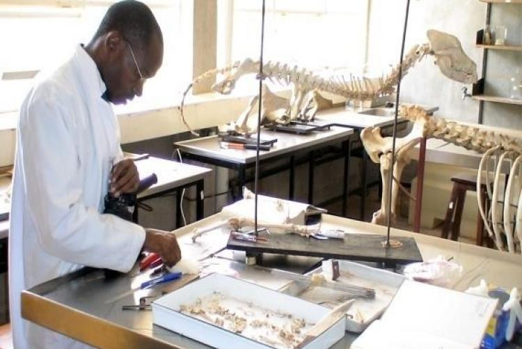 Master Of Science In Anatomy Sokoine University Of Agriculture